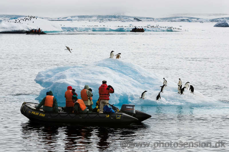 Zodiac cruise to Adelie penguins on iceberg.