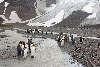 King Penguins at small glacier stream
