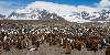 St. Andrews Bay - 250.000 King penguins